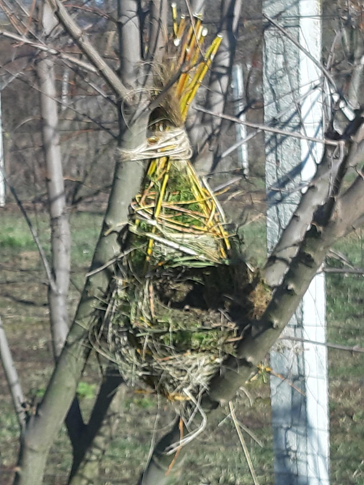 Vtáčie hniezdo - Obrázok č. 6