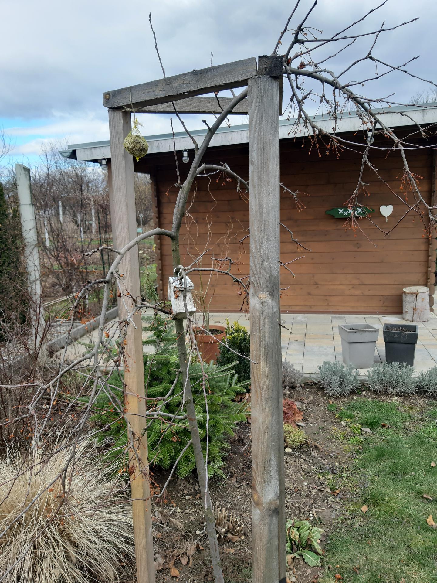 Záhrada 6. rok (2021) - Obrázok č. 5