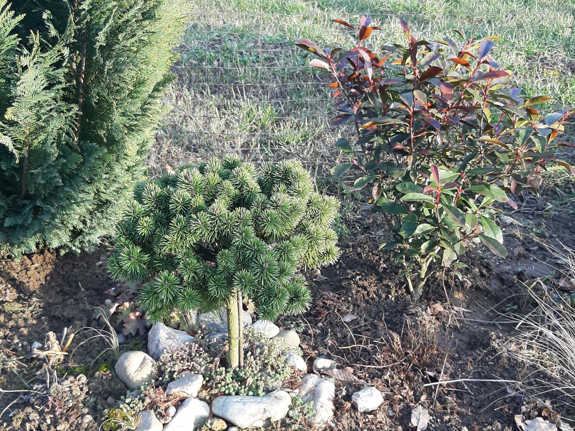 Záhrada 6. rok (2021) - Obrázok č. 1
