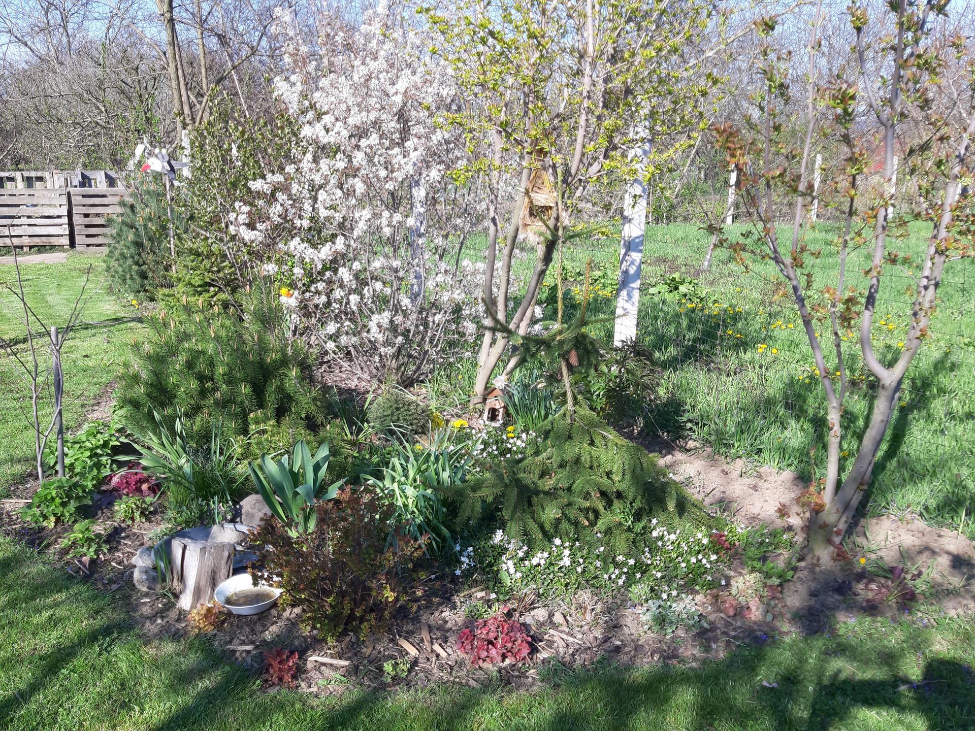 Záhrada 6. rok (2021) - Obrázok č. 25