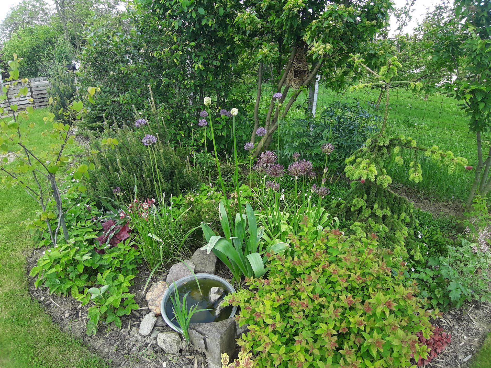 Záhrada 6. rok (2021) - Obrázok č. 44