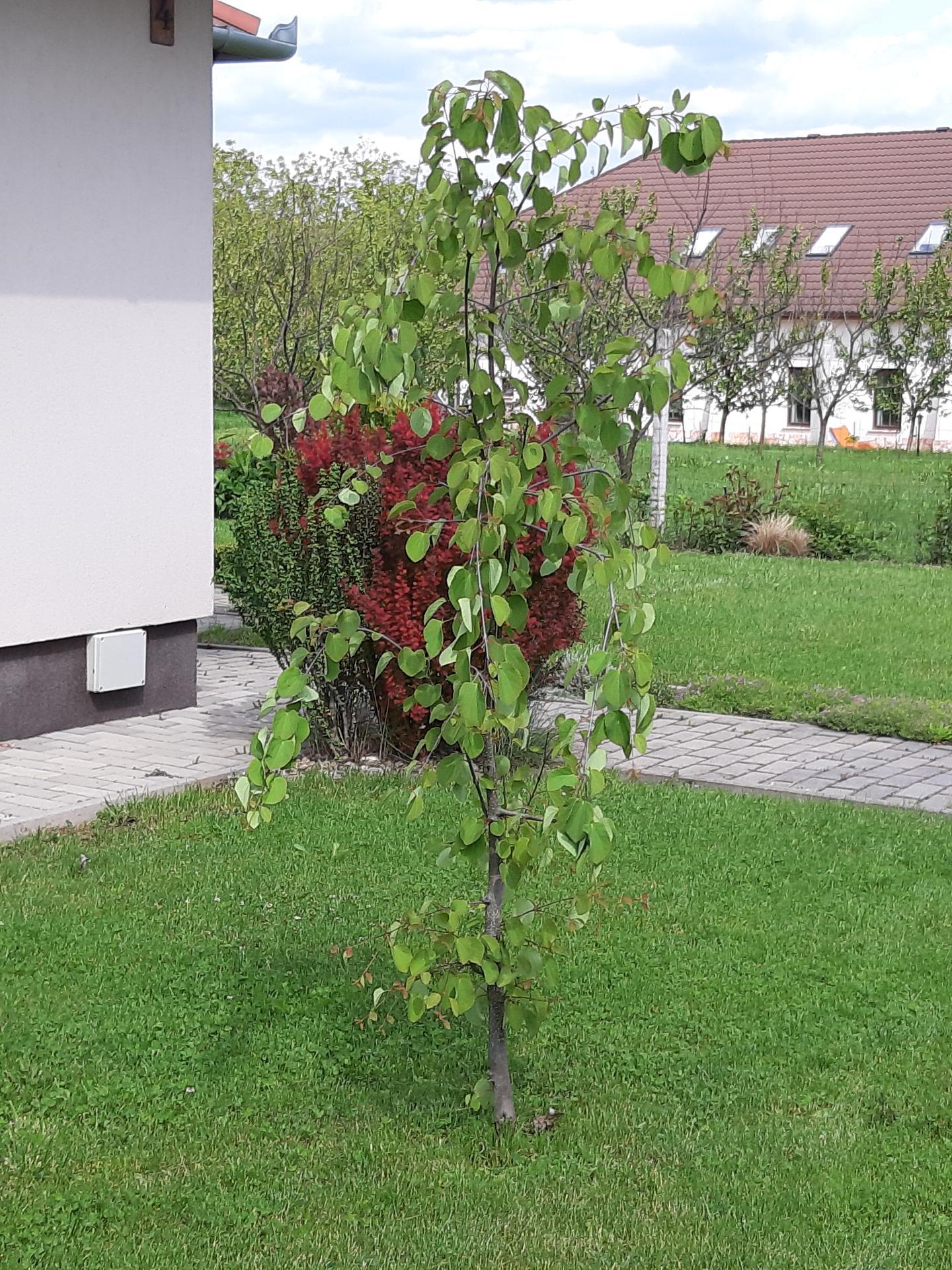 Záhrada 6. rok (2021) - Obrázok č. 45