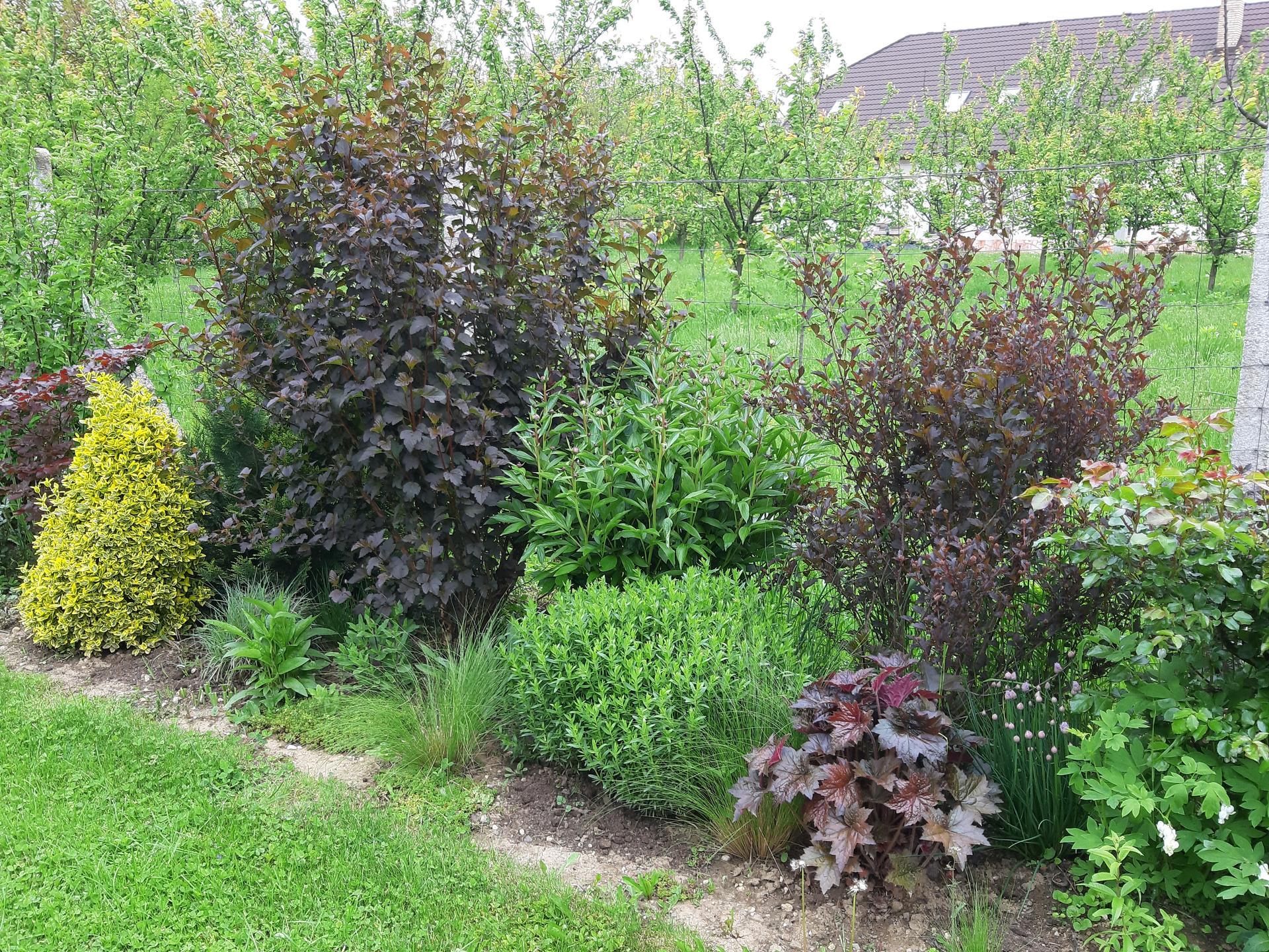 Záhrada 6. rok (2021) - Obrázok č. 42
