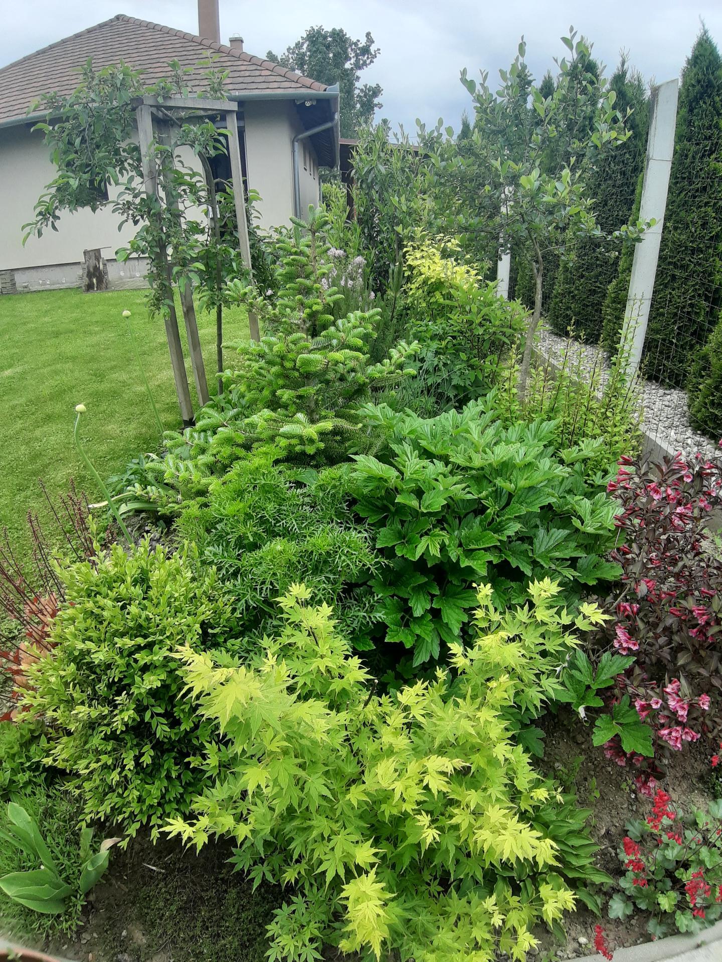 Záhrada 6. rok (2021) - Obrázok č. 55