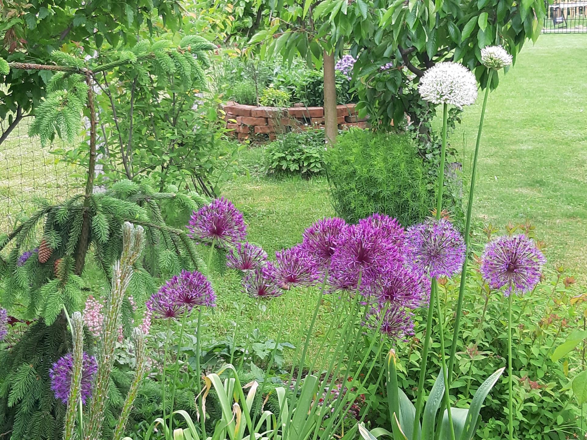 Záhrada 6. rok (2021) - Obrázok č. 52