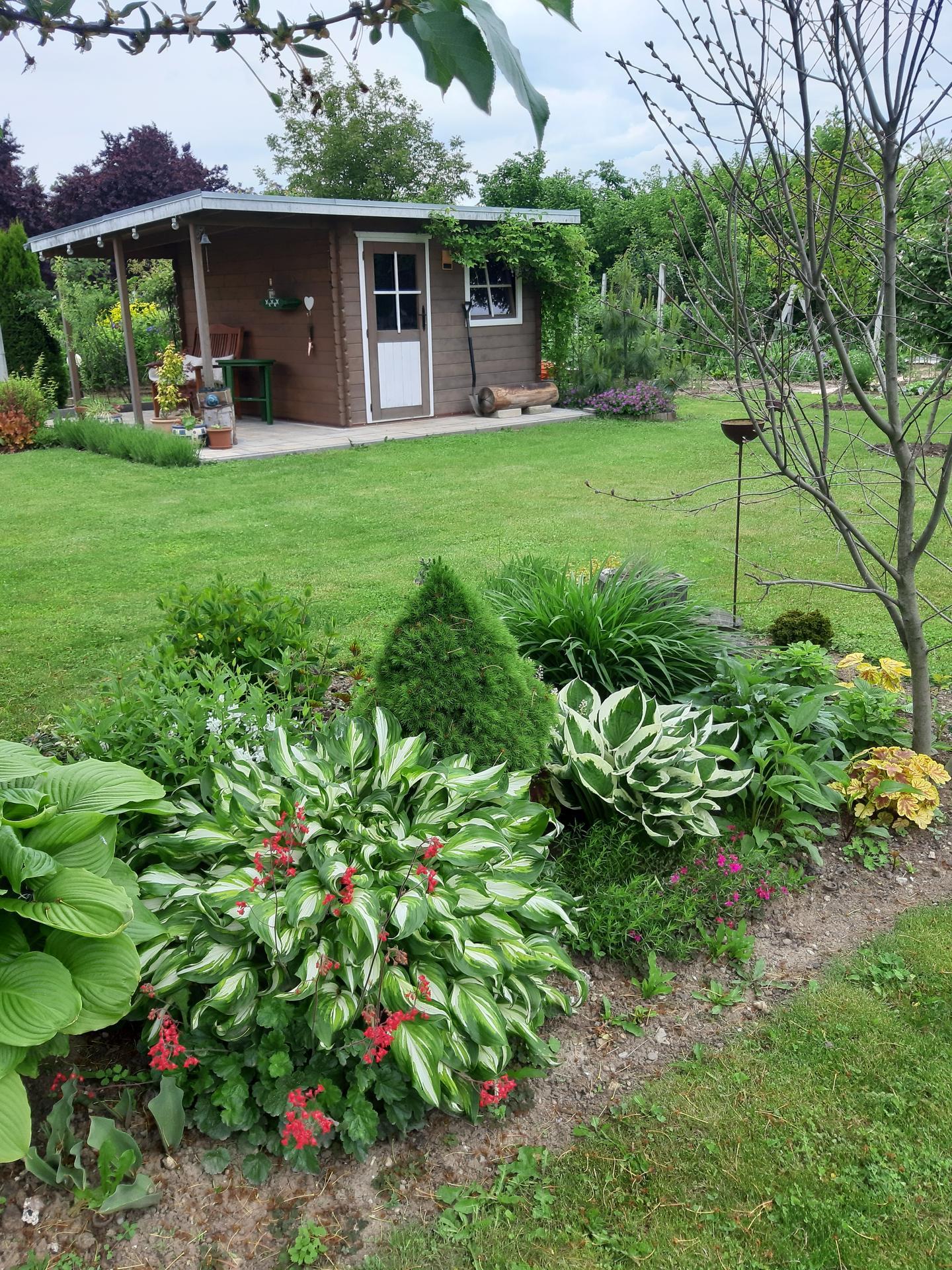 Záhrada 6. rok (2021) - Obrázok č. 53