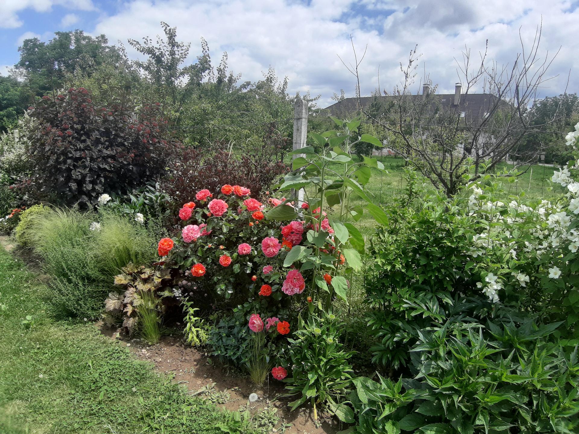Záhrada 6. rok (2021) - Obrázok č. 69