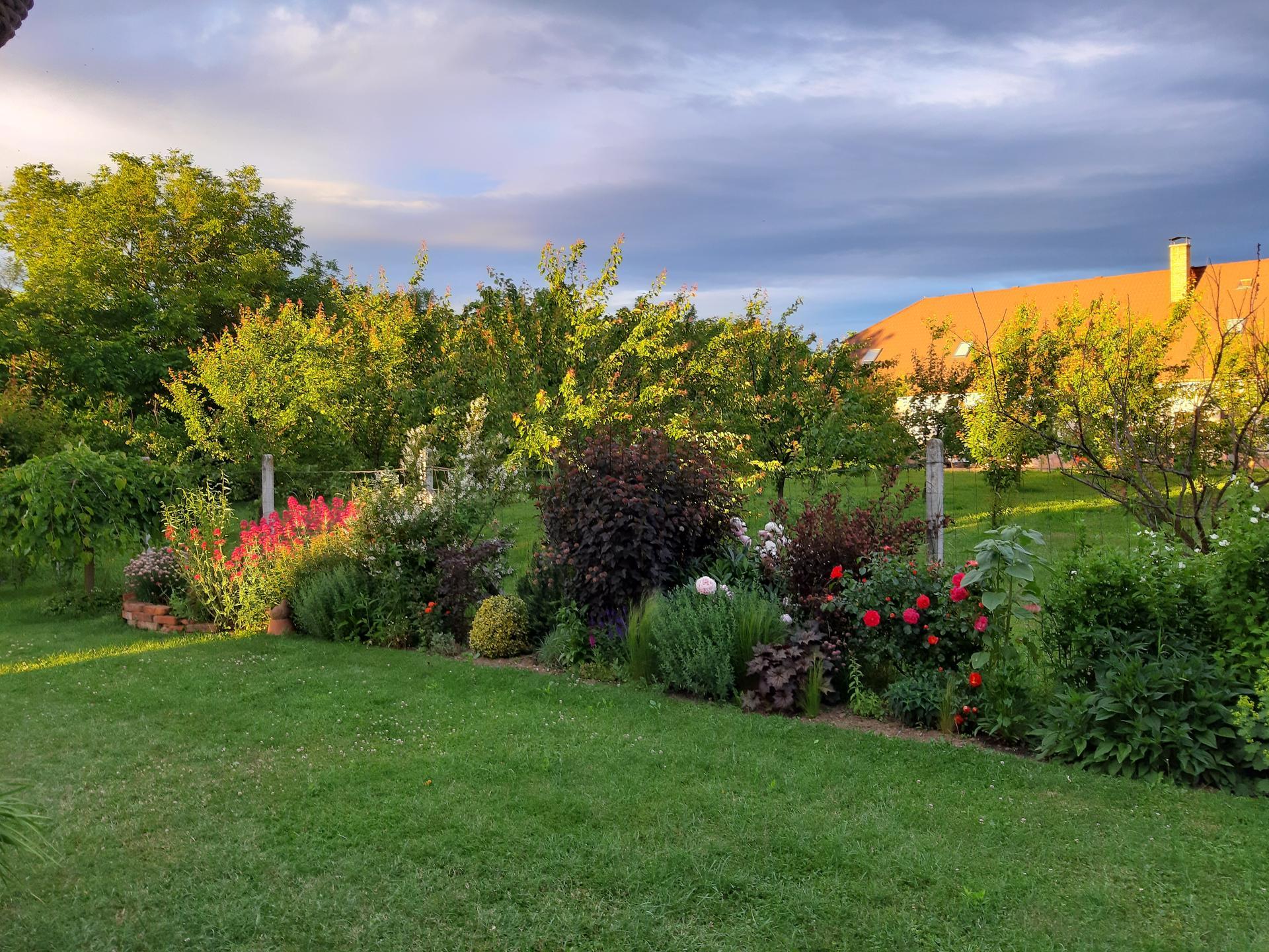 Záhrada 6. rok (2021) - Obrázok č. 72