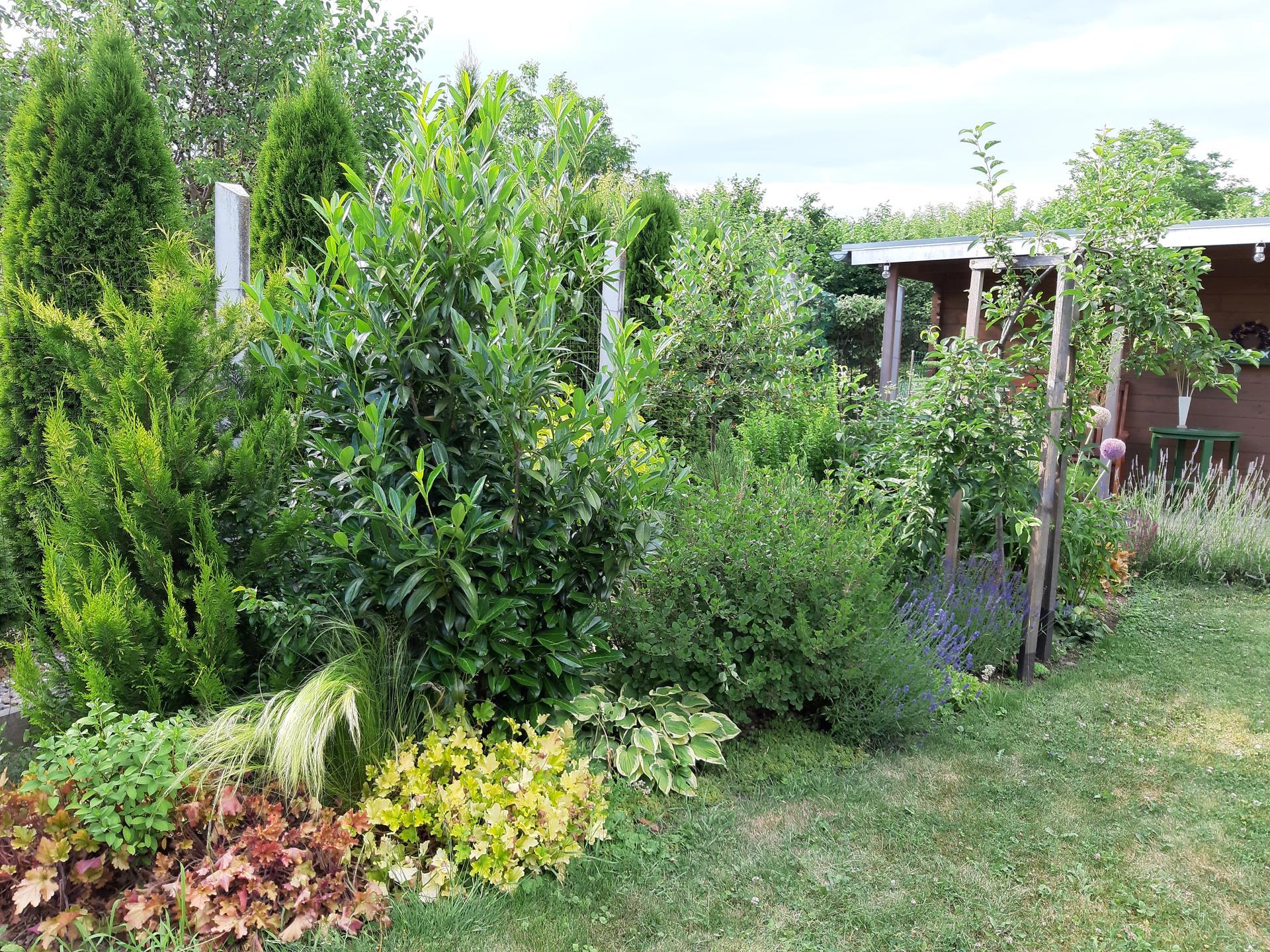Záhrada 6. rok (2021) - Obrázok č. 59