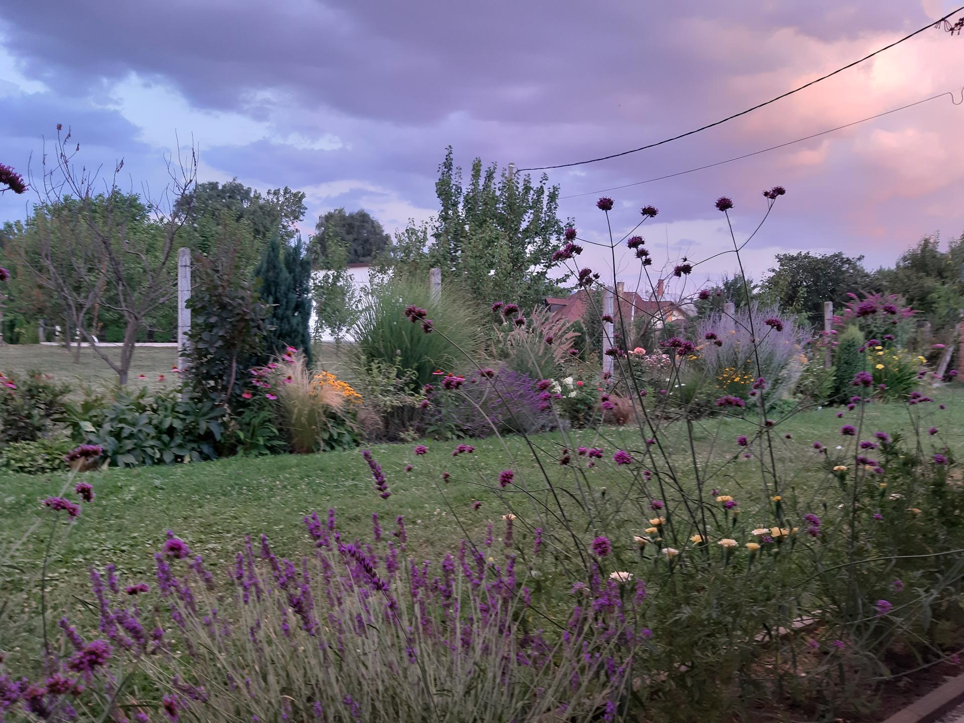 Záhrada 6. rok (2021) - Obrázok č. 79