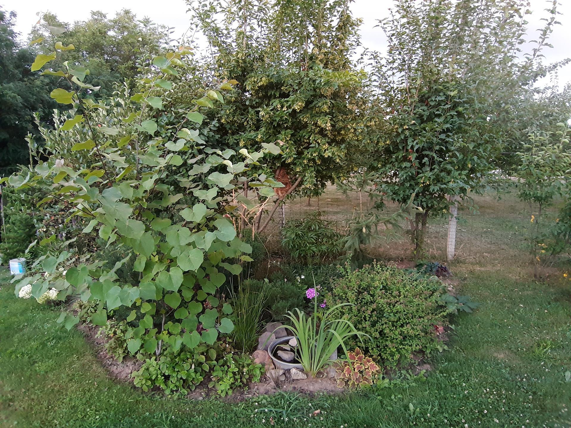 Záhrada 6. rok (2021) - Obrázok č. 80