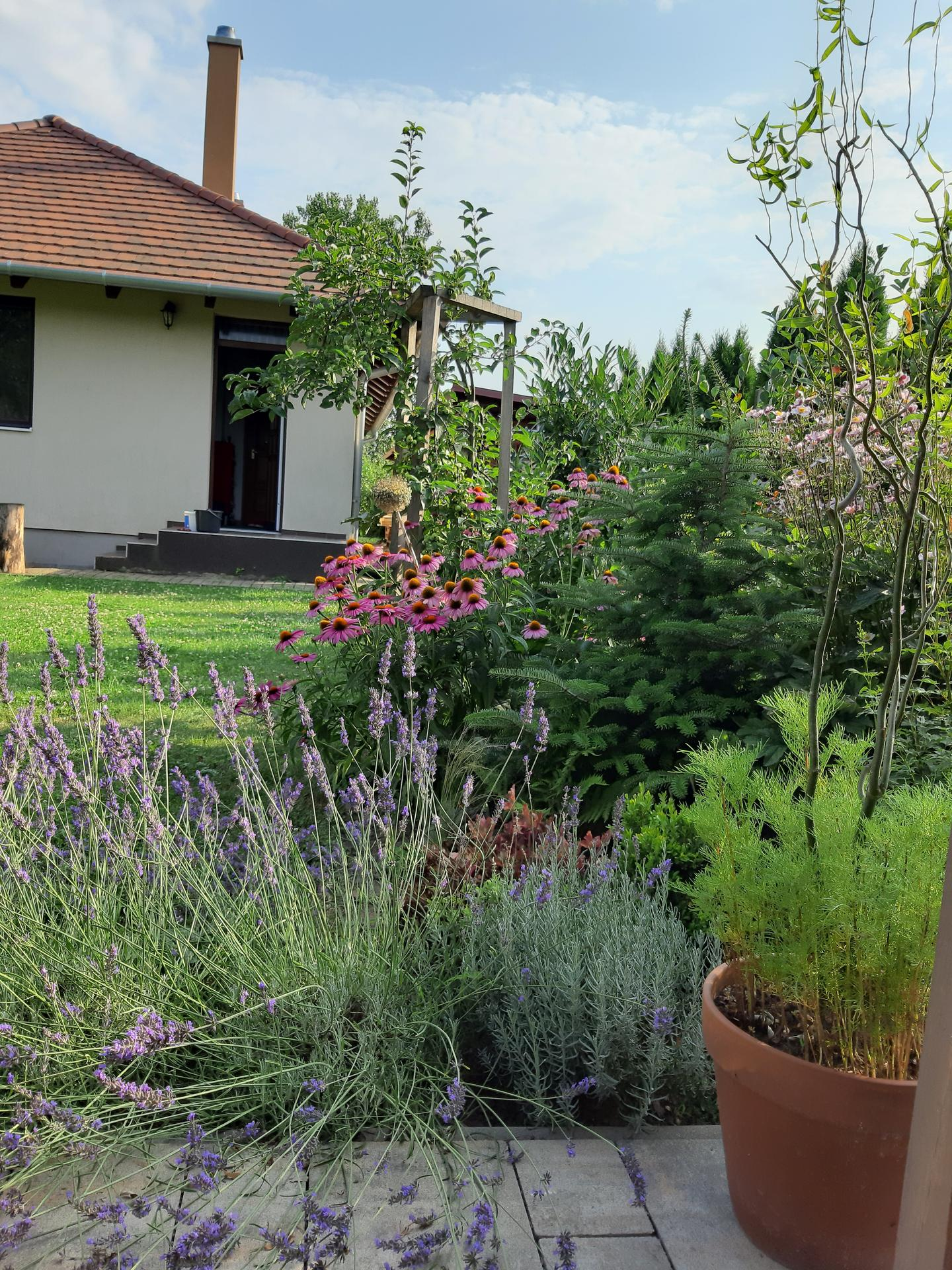 Záhrada 6. rok (2021) - Obrázok č. 81