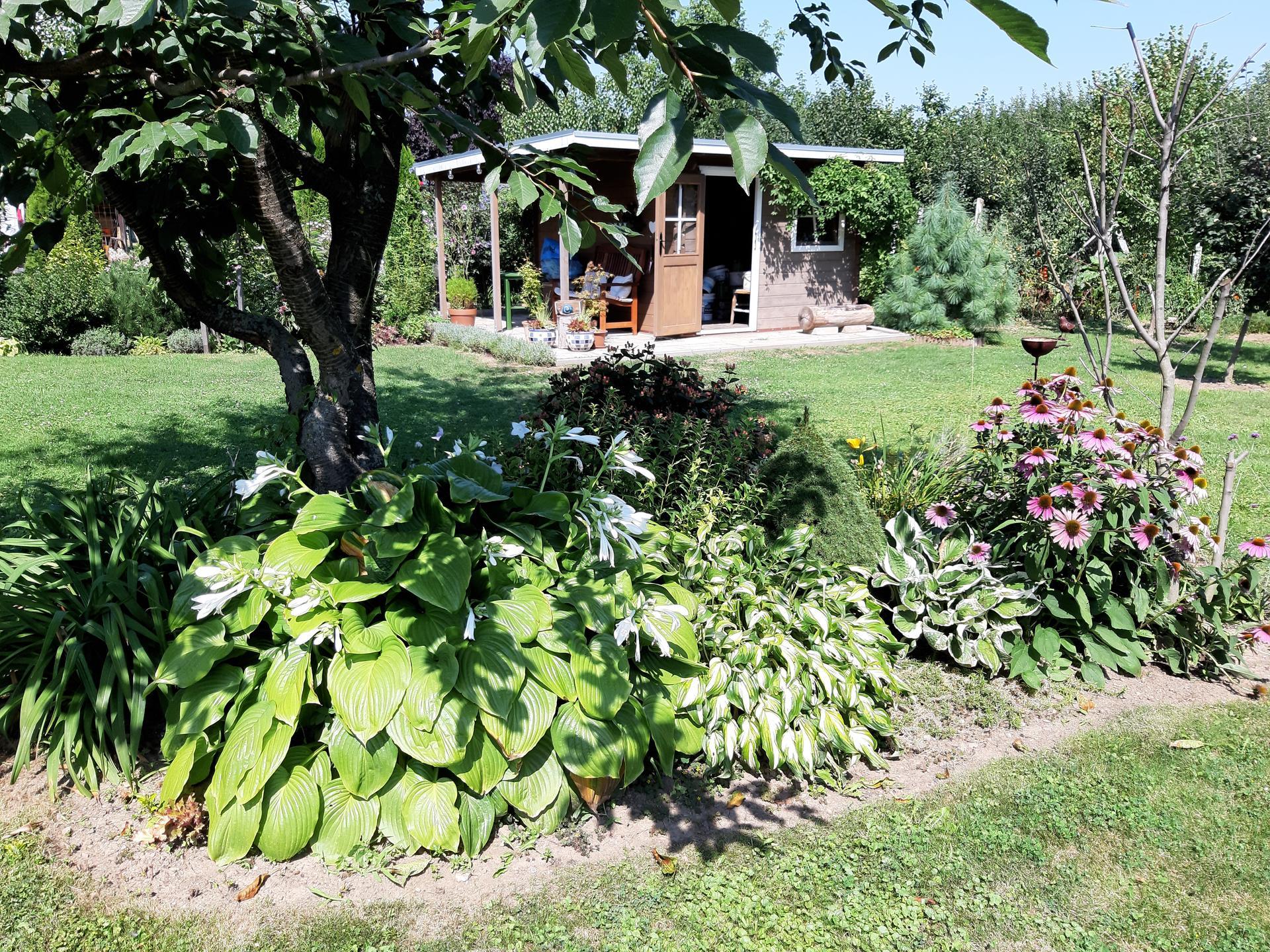 Záhrada 6. rok (2021) - Obrázok č. 78