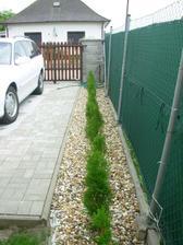 Pri plote mame vysadene tuje, su este malicke ale krasne zelene a takmer na chlp rovno nasadene ;)