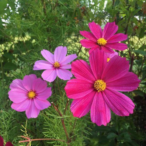 ahojte, som Renata, zahradnicenie... - Obrázok č. 2