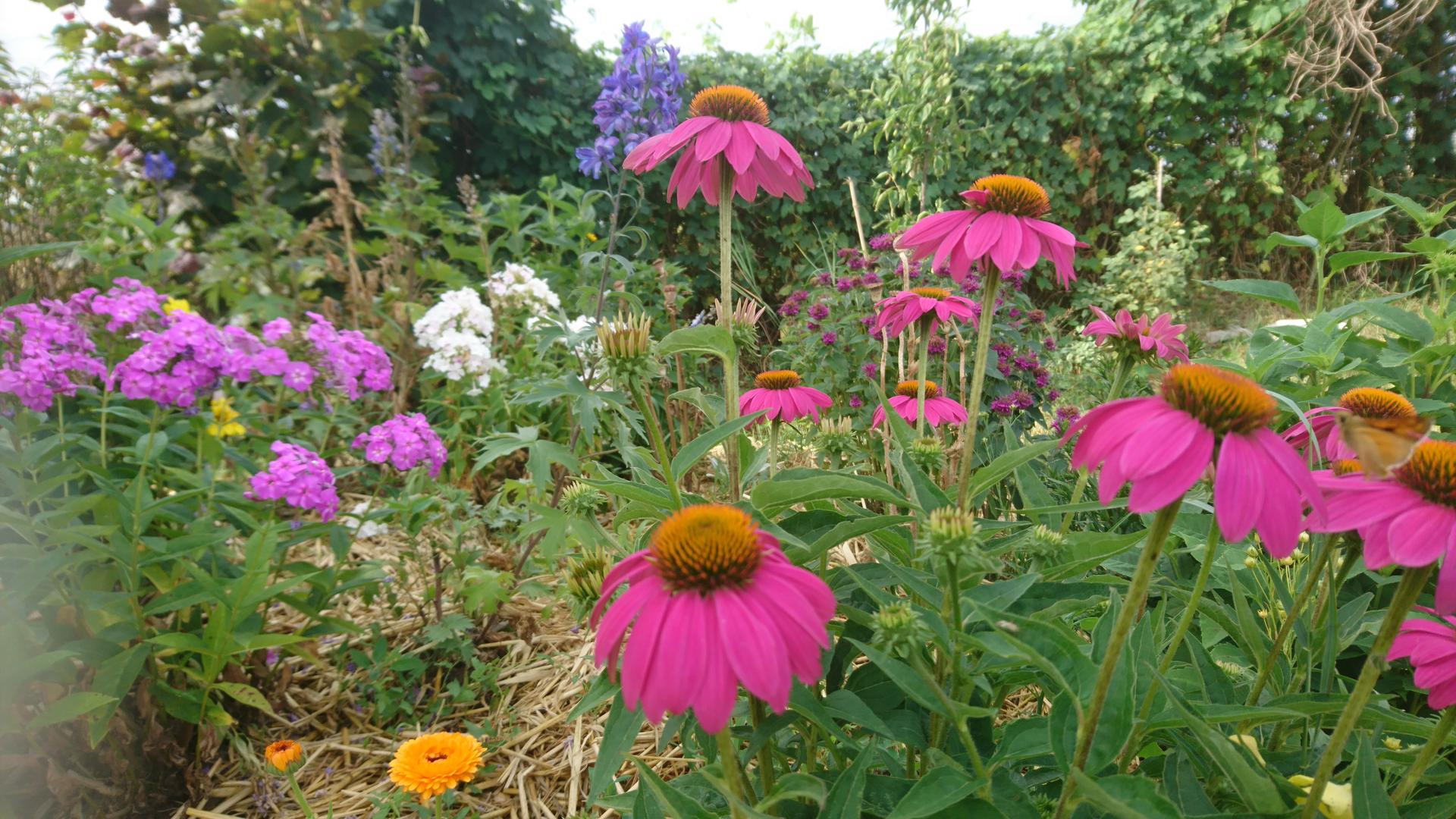 ahojte, som Renata, zahradnicenie... - Obrázok č. 3
