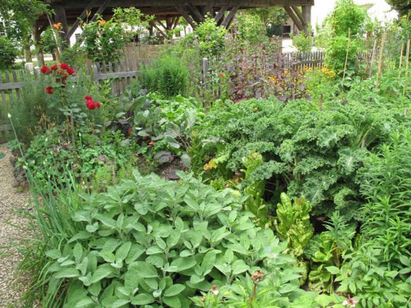 🤔Co do zahrady? 🌻🌹🌳🌱(inspi) - Obrázok č. 46
