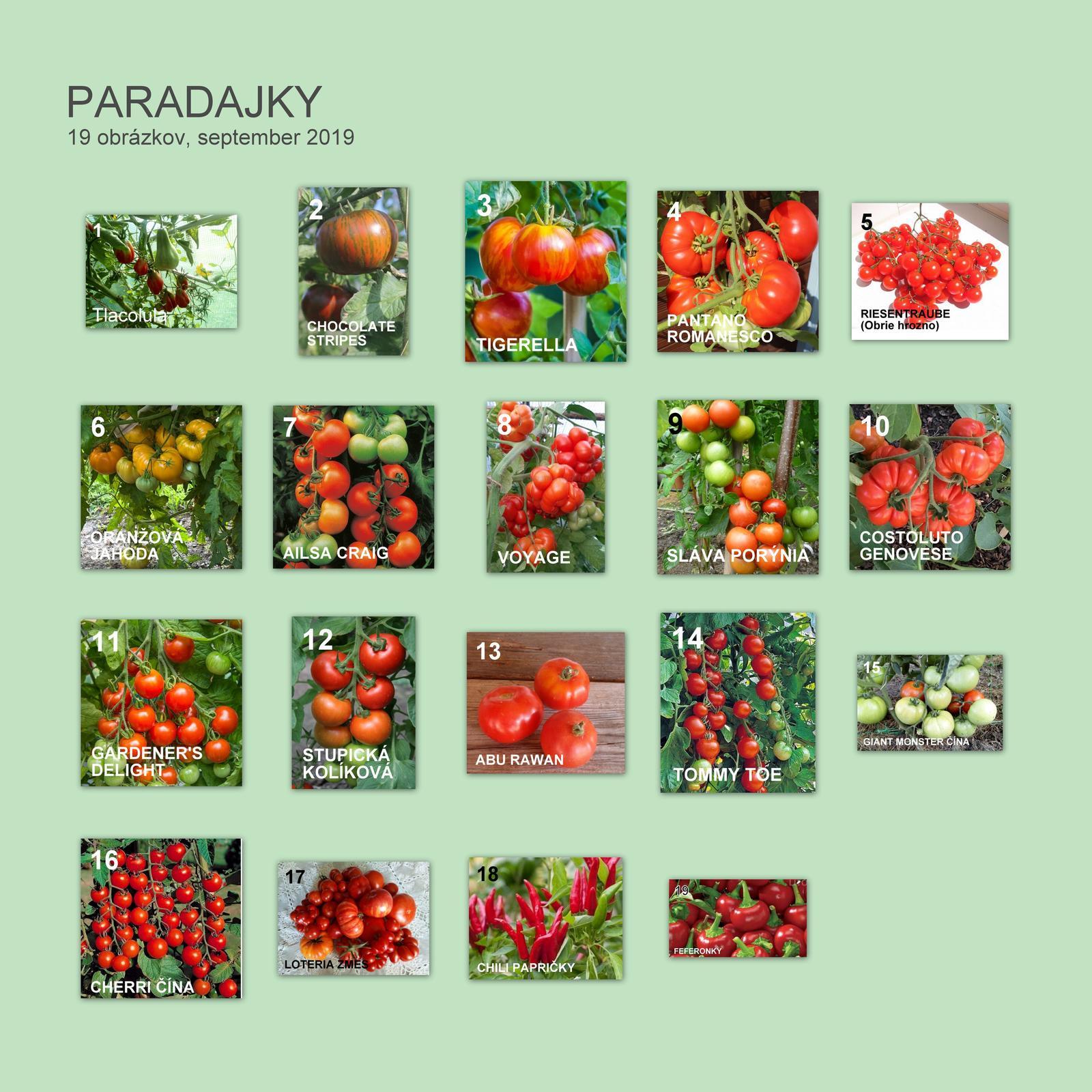 Semená rajčín - Obrázok č. 1