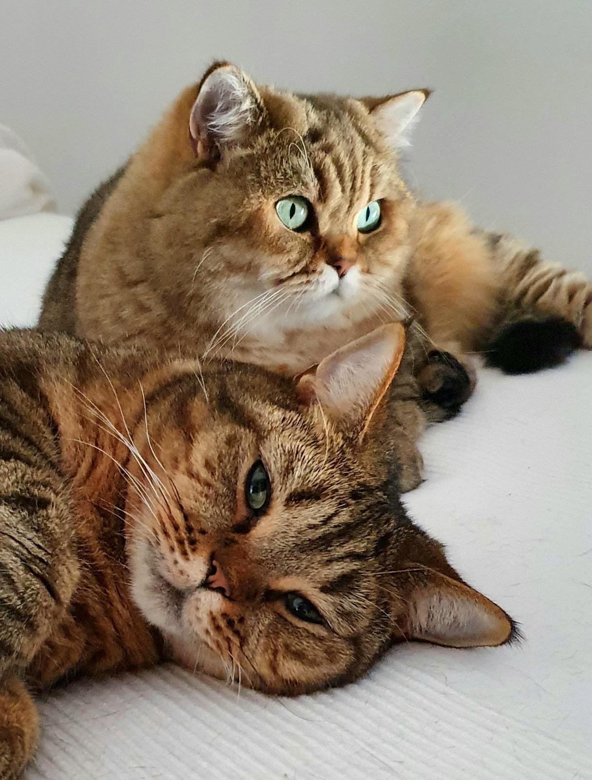 Tigríkovia - vynimocna chvila...ked sa nebiju :-)
