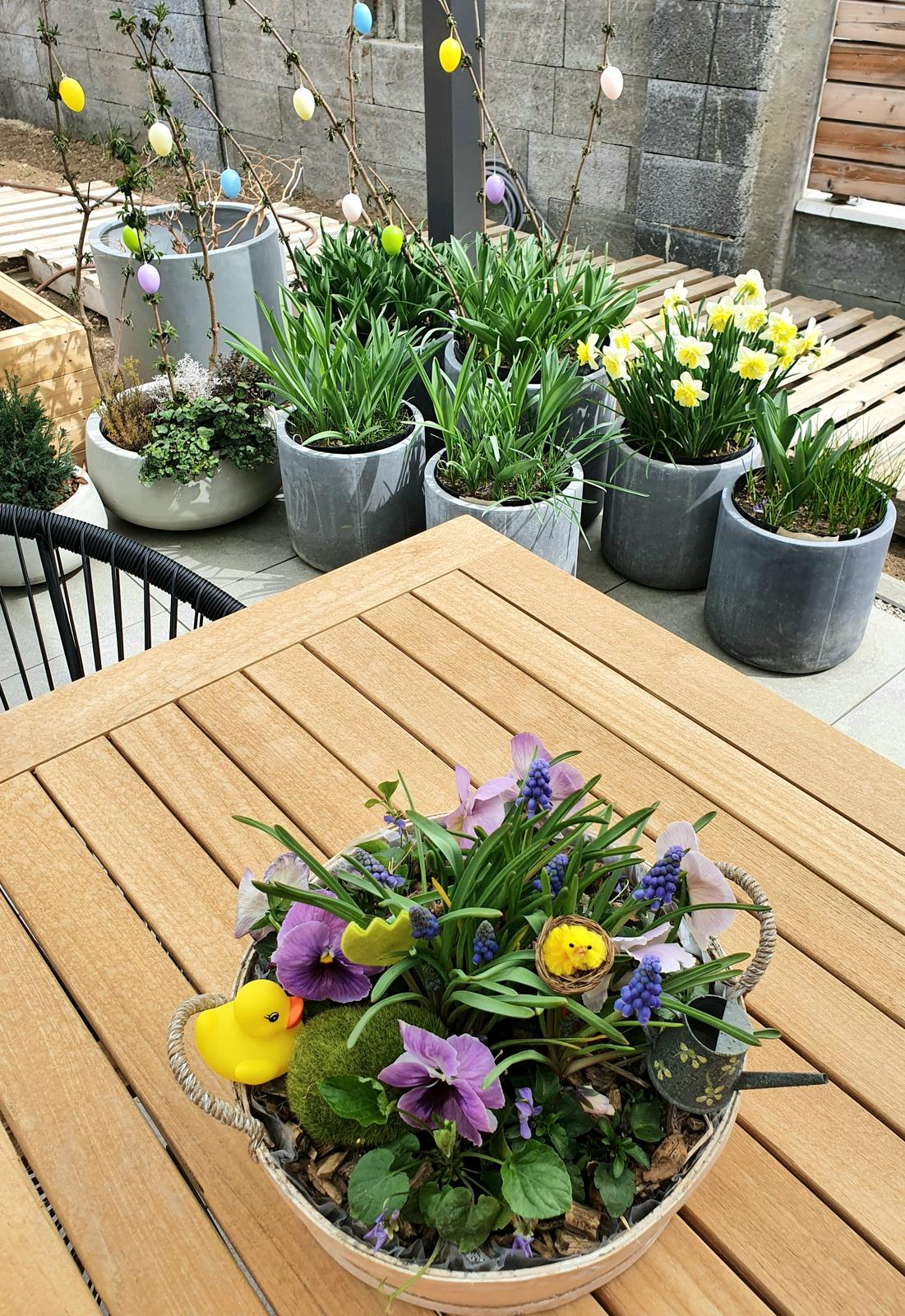 T-éčko po roku 🏡 - Modrice uz kvitnu, cibuloviny v kvetinacoch sa tiez snazia, cochvila zakvitnu tulipany a cesnaky si este pockaju, ale uz sa na ne strasne tesim :-) 🌸🌺🌿🌱🌾