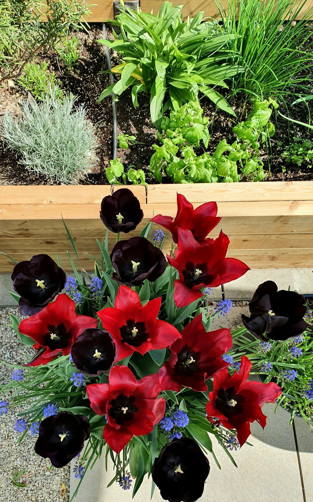 T-éčko po roku 🏡 - Vykvitli aj čierne tulipány