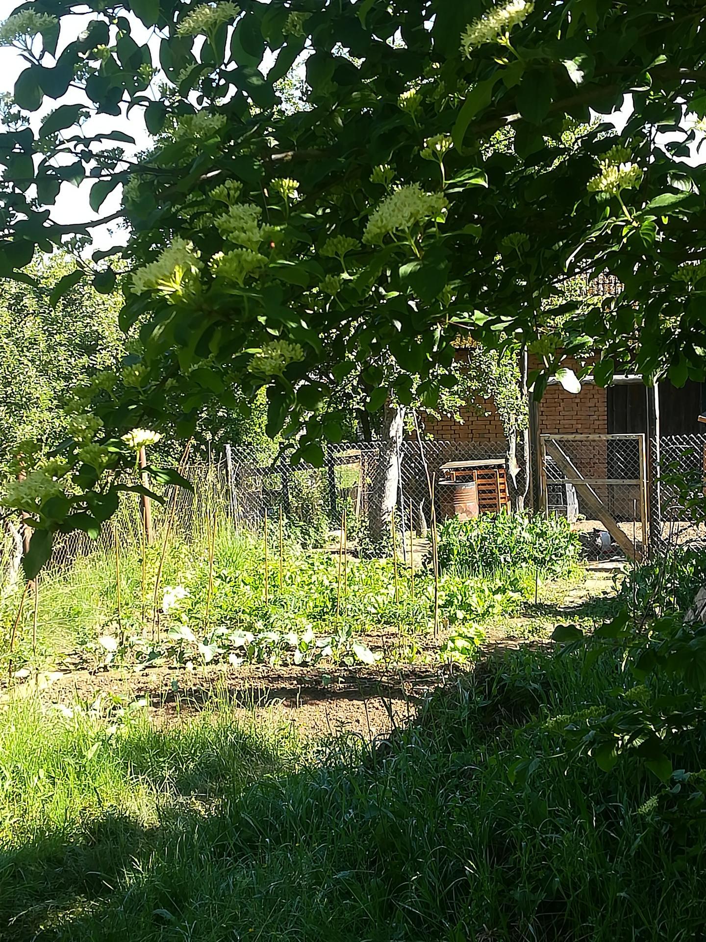 Žijeme vonku - Pohľad z úžitkovej záhrady ku sliepkam