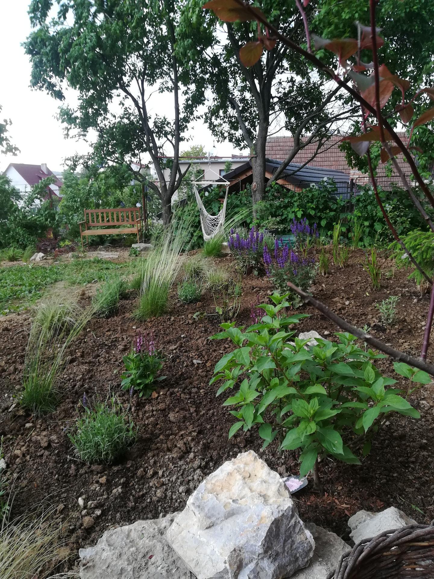 Žijeme vonku - Vysádzam ďalší kúsok našej divočiny pre včely 😊 šalvie, levandule, perovskie, hortenzia, drieň.. A samozrejme trávy 😊