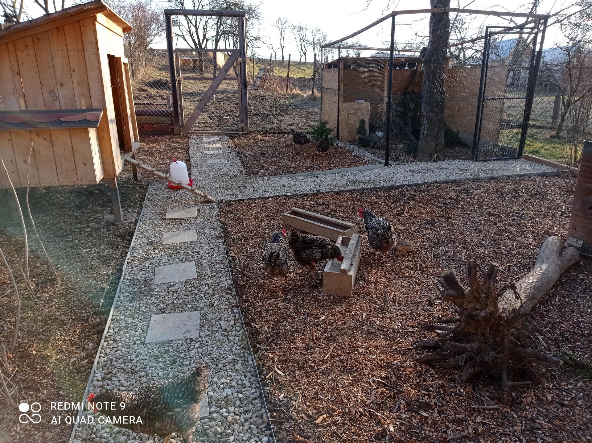 Žijeme vonku - Konečne aspoň tu nechodíme po blate...sliepky majú momentálne lepší dvor ako my 😂😂