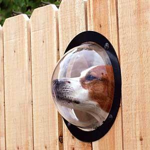 Veľmi lacný plný plot - Toto sa mi fakt páči, keby som to spravila svojej havine, tak by tam tú gebuľu mala pichnutú stále, taká je zvedavá...:-)