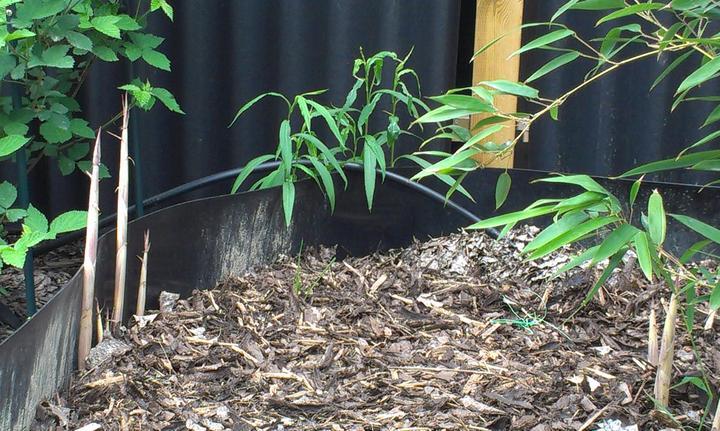 Záhradka - Pre toto sa dava korenova zabrana k bambusom. Keby som ju nedala, tak za par rokov mam v celej zahrade len bambus.