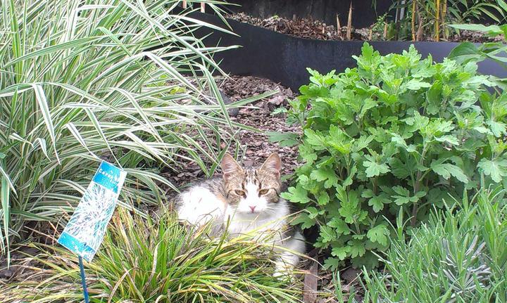 Záhradka - Miesto zahradneho trpaslika mam macku.