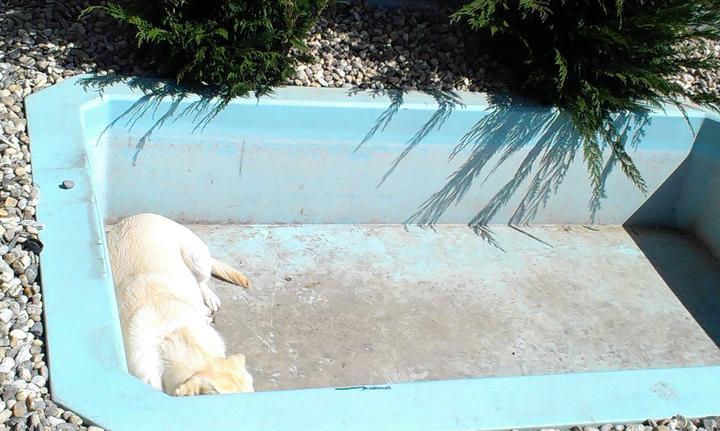 Záhradka - Pred sezonou. Bazen miluje, chce v nom byt aj bez vody. :-)