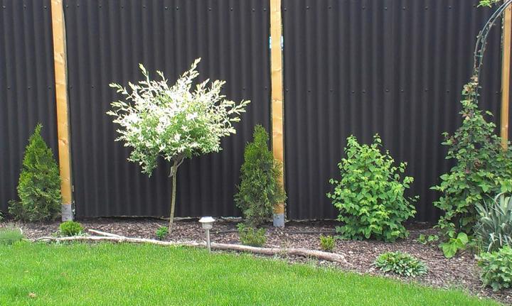 Záhradka - Obrázok č. 63