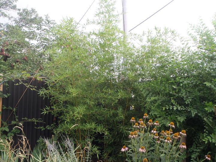 Záhradka - Obrázok č. 65