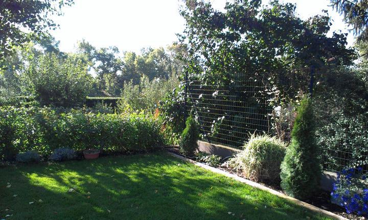 Záhradka - Zahradka po roku.