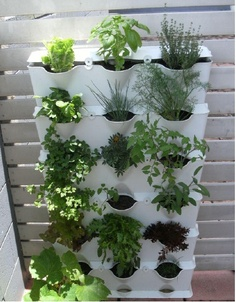 Zeleninová záhradka po novom - Obrázok č. 5