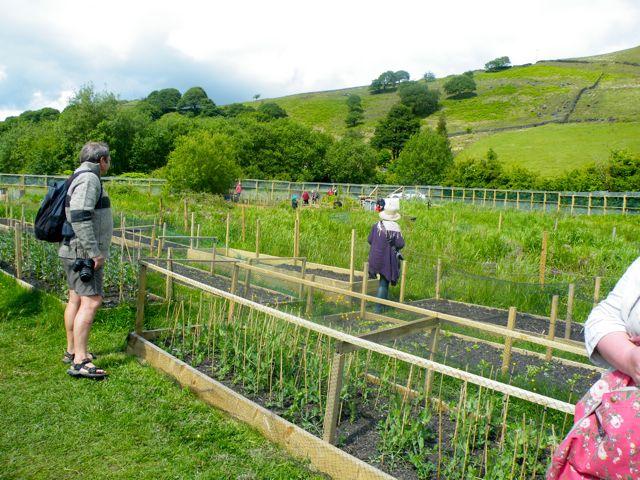 Zeleninová záhradka po novom - Obrázok č. 10