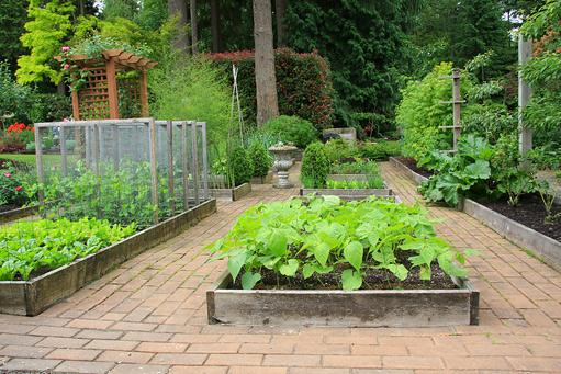 Zeleninová záhradka po novom - Obrázok č. 11