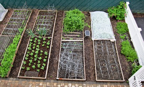 Zeleninová záhradka po novom - Obrázok č. 12