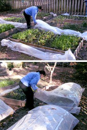 Zeleninová záhradka po novom - Obrázok č. 13