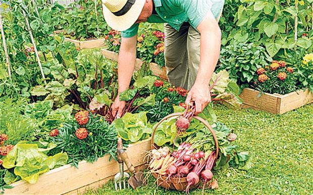 Zeleninová záhradka po novom - Obrázok č. 16