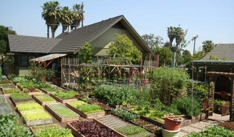 Zeleninová záhradka po novom - Obrázok č. 24