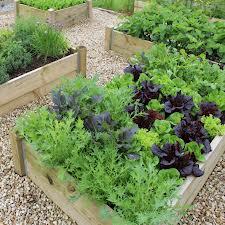 Zeleninová záhradka po novom - Obrázok č. 28