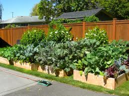 Zeleninová záhradka po novom - Obrázok č. 34