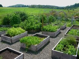 Zeleninová záhradka po novom - Obrázok č. 36