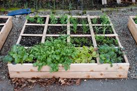 Zeleninová záhradka po novom - Obrázok č. 39