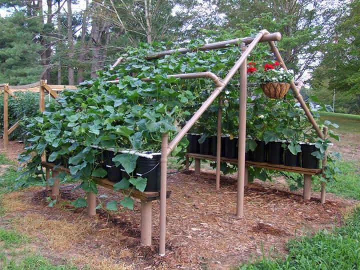 Zeleninová záhradka po novom - Obrázok č. 41