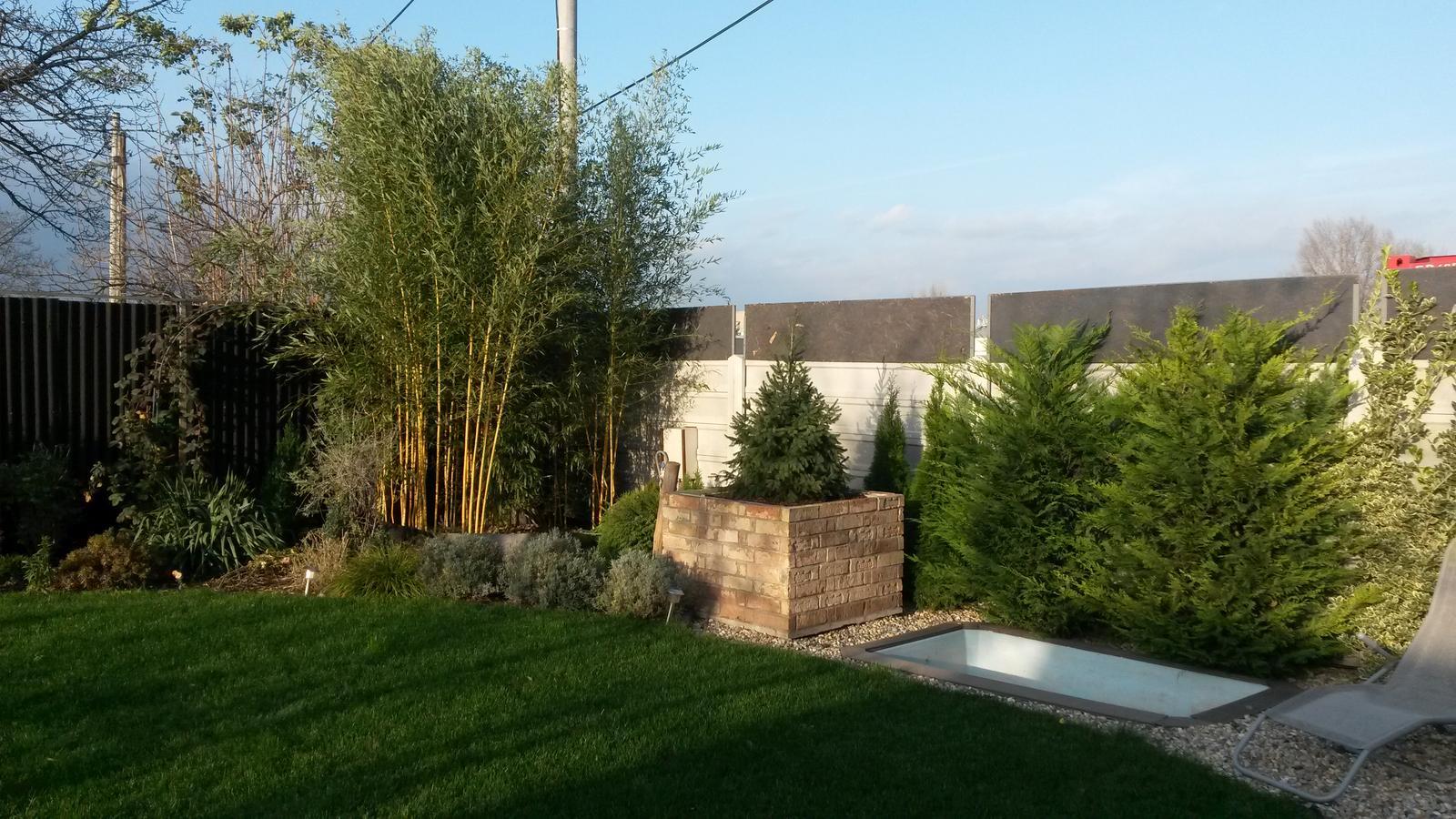 Záhradka - Moja pycha v pozadi - bambus po 3 rokoch.
