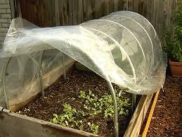 Zeleninová záhradka po novom - Obrázok č. 75