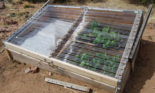 Zeleninová záhradka po novom - Obrázok č. 86